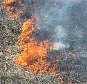 Барнаул и область готовы к началу пожароопасного периода