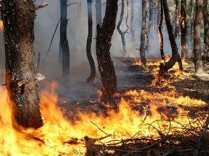 Человеческий фактор – главная причина пожаров в лесах