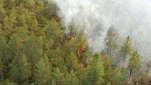 Леса в огне