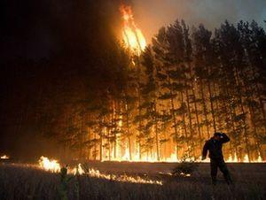 Несложные правила поведения при пожаре в лесу помогут сохранить жизнь