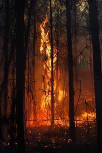 Один человек погиб после того, как сжигание травы вышло из-под контроля