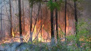 Опасные леса