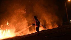 Пожары в Португалии: три дня национального траура по жертвам лесных пожаров