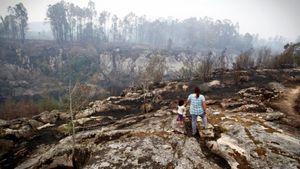 Португальские и испанские лесные пожары: число погибших выросло до десятков