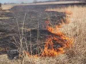 Сжигание сухой травы впредь под запретом