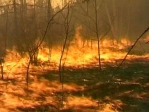 В Дальневосточном регионе огонь продолжает пожирать леса