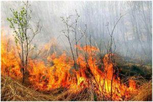 За минувшие сутки на Дальнем востоке ликвидировано шесть лесных пожаров