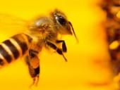 Сегодня Всемирный день пчел
