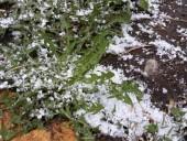В Казахстане выпал майский снег
