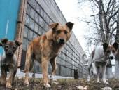 Бродячие собаки в РФ затащили маленького ребенка в канализацию
