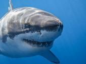 Серфер погиб после нападения акулы возле острова Реюньон