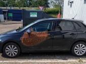В Нидерландах пчелы заблокировали автомобиль
