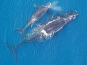 У побережья Канады нашли тела 6 мертвых китов