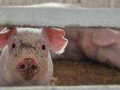 В Польше не хватает ветеринаров для борьбы с АЧС