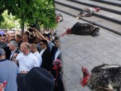 Администрацию президента Молдовы забросали индюками