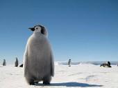 В России запретили держать дома медведей, пингвинов и кобр