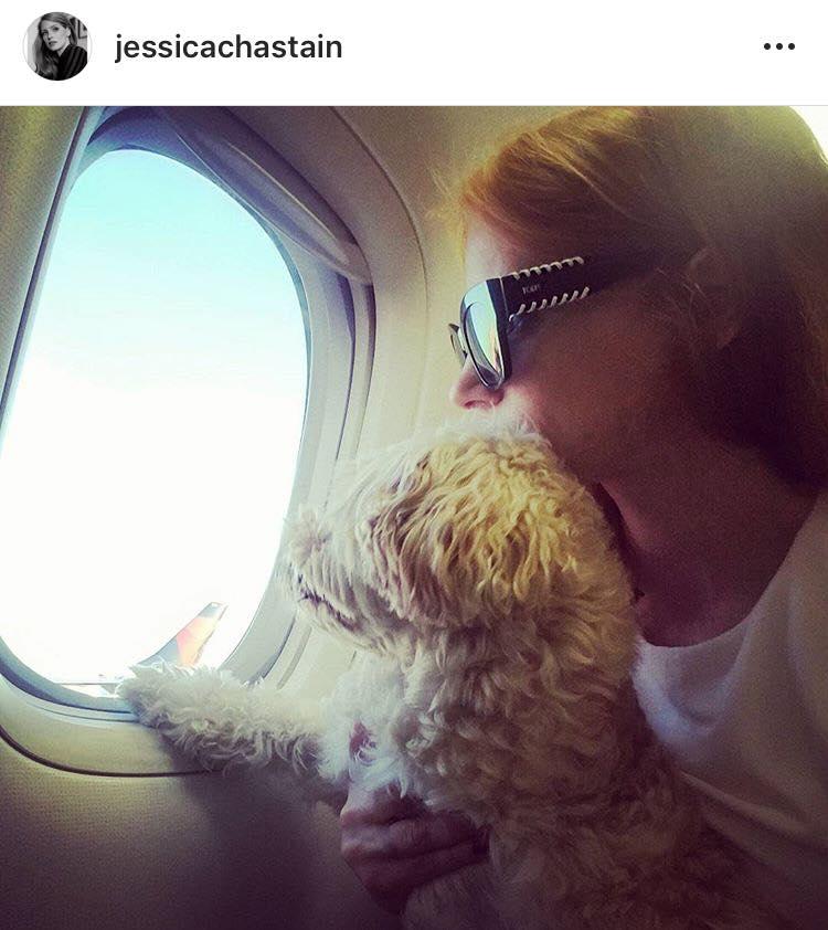 Смокинг и поцелуи: как живут собаки знаменитостей