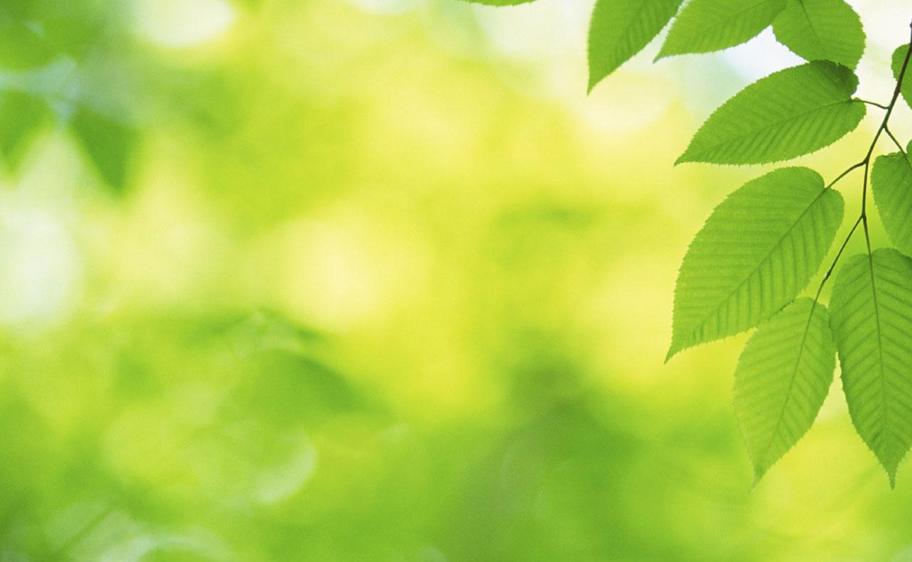 Быстрая и качественная подготовка экологических документов по доступной цене