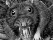 В одном из детсадов Молдовы заметили крыс