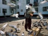 В российском городе ввели штрафы за кормление голубей