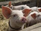 За месяц из-за АЧС свинина в Китае подорожала на 20%