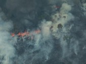 Опубликовано фото масштабов лесных пожаров в Амазонии