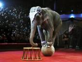 На женевской конференции запретили продажу африканских слонов в зоопарки и цирки