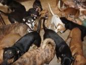 """Женщина приютила 97 собак во время урагана """"Дориан"""" на Багамских островах"""