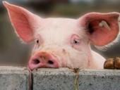Китайским семьям выделили субсидии на покупку подорожавшей свинины