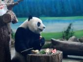 В зоопарке Тайваня панд кормили пряниками по случаю Праздника середины осени