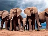 На Шри-Ланке слоны бросились в толпу: пострадали 17 человек