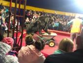 В Карелии медведь напал на дрессировщика во время представления