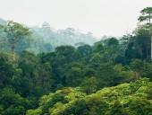 Вырубка тропических лесов вредит экологии гораздо больше, чем считалось ранее