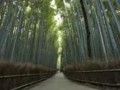 Бамбуковый лес Сагано в Киото назван одной из красивейших в мире рощ