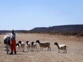 Жители Южной Африки столкнулись с голодом из-за сильной засухи