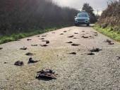 Сотни мертвых птиц обнаружили на одной из дорог Уэльса