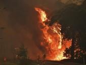 Австралийские власти сообщают об катастрофическом размахе лесных пожаров