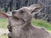 Пожары в Австралии: погибли 24 человека и почти 500 млн животных