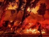 Из-за пожаров в Австралии погибли почти полмиллиарда животных - экологи