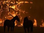 Австралия впервые в истории привлекает военных для борьбы с лесными пожарами