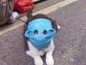 Лама в маске: как в Китае защищают домашних любимцев от коронавируса