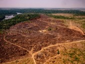 В Бразилии вырубка лесов Амазонии достигла рекордной отметки
