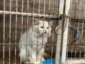 В Пакистане из-за карантина животных бросили в клетках в зоомагазинах и на рынках
