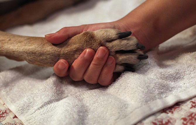 Гуманное усыпление животных на дому специалистами