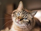 В Бельгии кошка заразилась коронавирусом от хозяина - СМИ