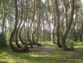 В Польше запретили посещать леса и нацпарки из-за коронавируса