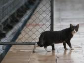 В одном из городов Китая запретили есть собак и кошек