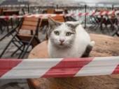 В США подтвердили первые случаи заражения котов коронавирусом
