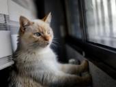 В Испании зафиксирован первый случай COVID-19 у кота