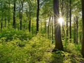 Потеря лесов в мире продолжается, хотя и более медленными темпами - ФАО